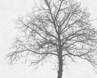 Fototapete «Solidary Tree Grey» DD112546